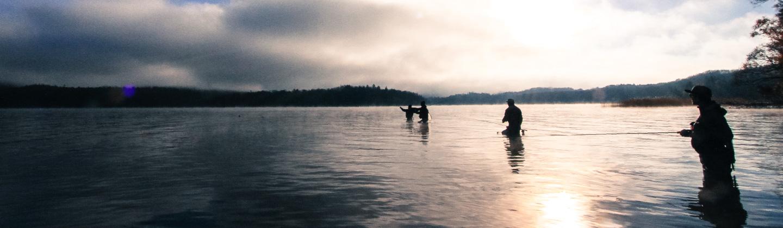 阿寒湖の魚類と水生生物