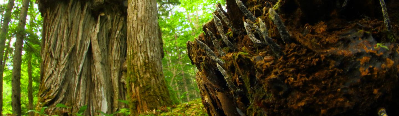 阿寒の森の植物