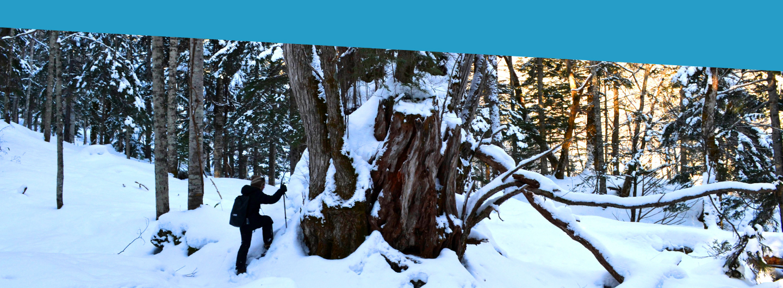 #04 巨木の森を行く!異国の森 スノーウォーク