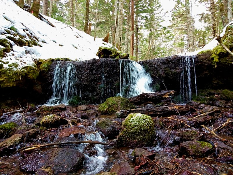 阿寒の森の水巡り プレミアムツアー(冬季)