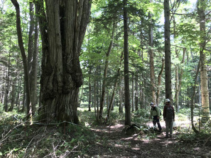 不思議の森(光の森)へご招待 プレミアムツアー