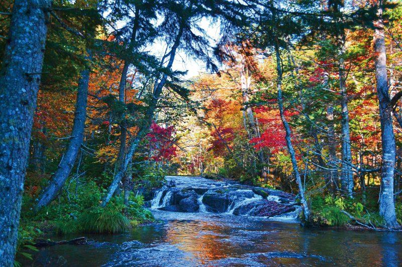 湖北の森アドベンチャー プレミアムツアー